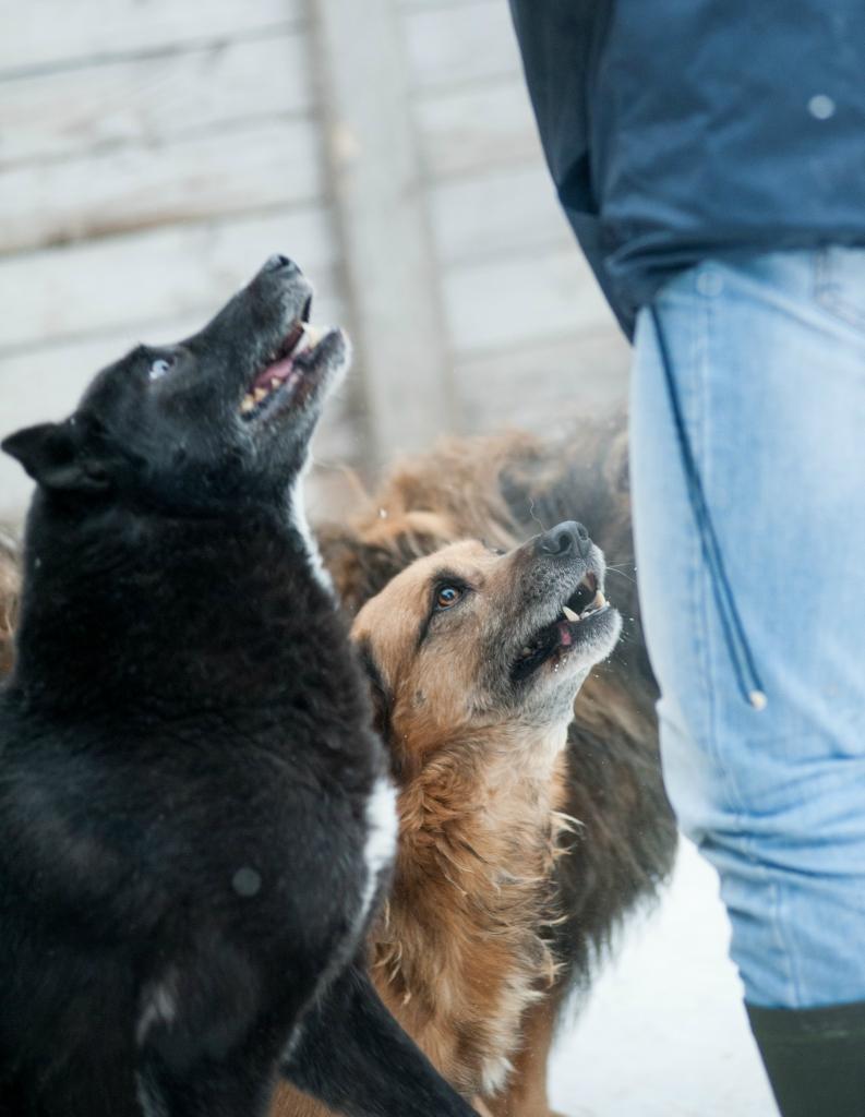 Эрик собака из приюта догпорта