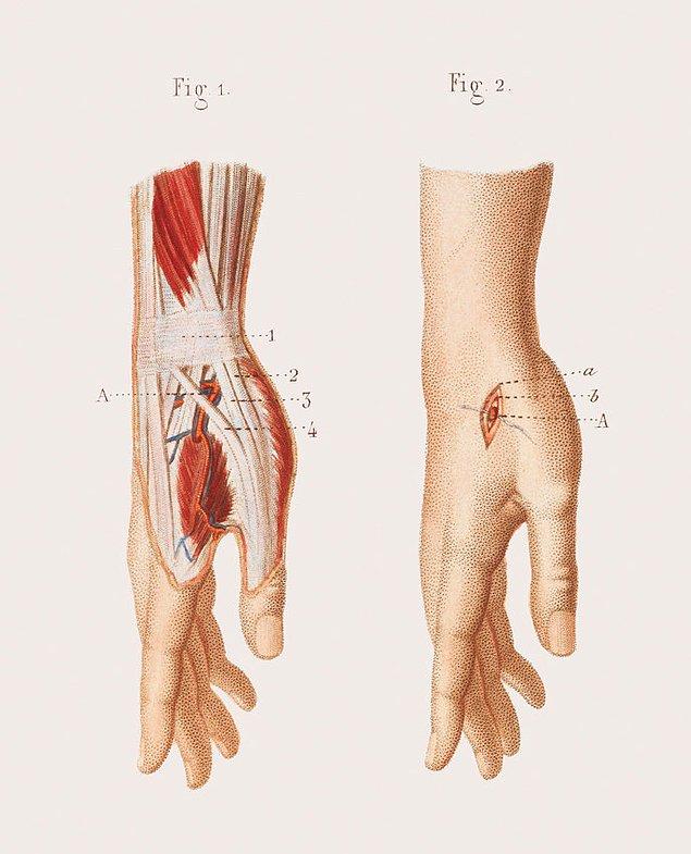 Анатомия подмышечной впадины и кровеносного сосуда рядом с ней