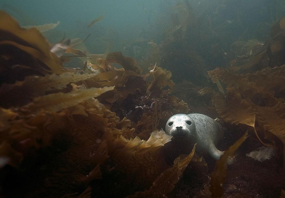 Мягкие кораллы и Морские ежи и берегов островов Фарн. (Фото Dan Kitwood | Getty Images):