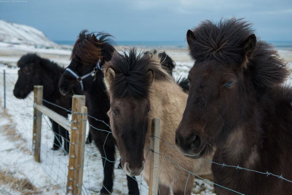 Чудо следующее: вулканы и лавовые поля, и чёрные пляжи .  Исландия находится на стыке двух п