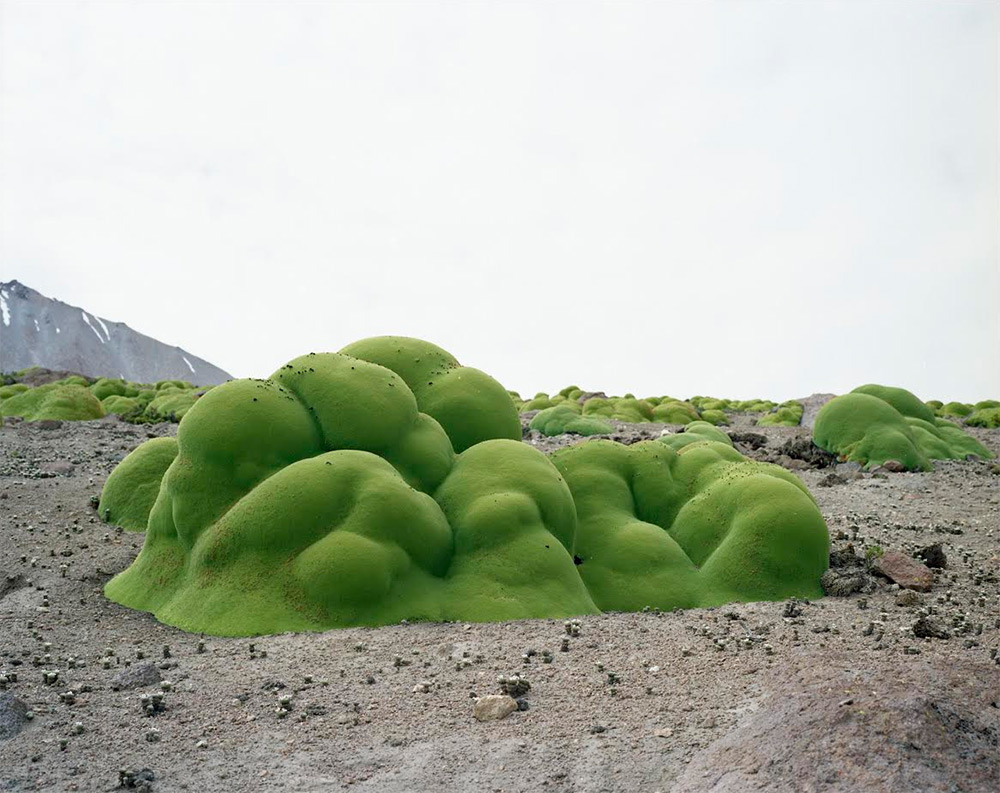 Artist Rachel Sussman Photographs the Oldest Living Things in the World before They Vanish (7 pics)
