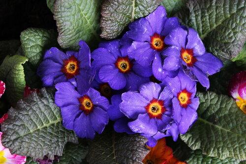 Краса весны