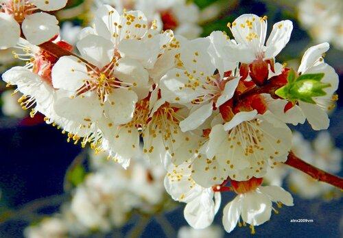 Прекрасное и нежное цветение