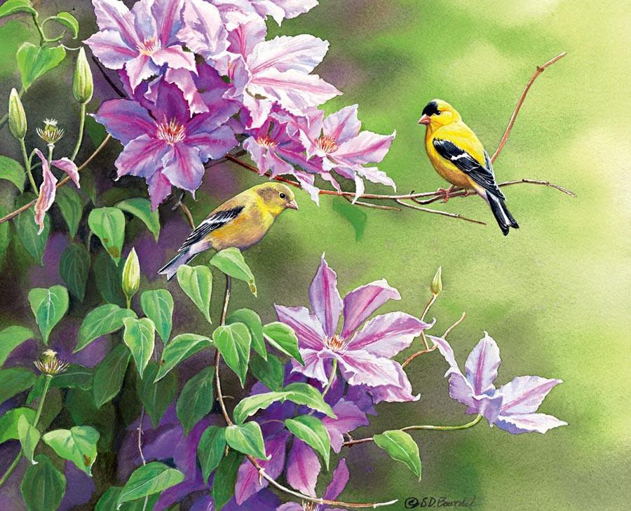 Songbirds GRID_14WC.indd
