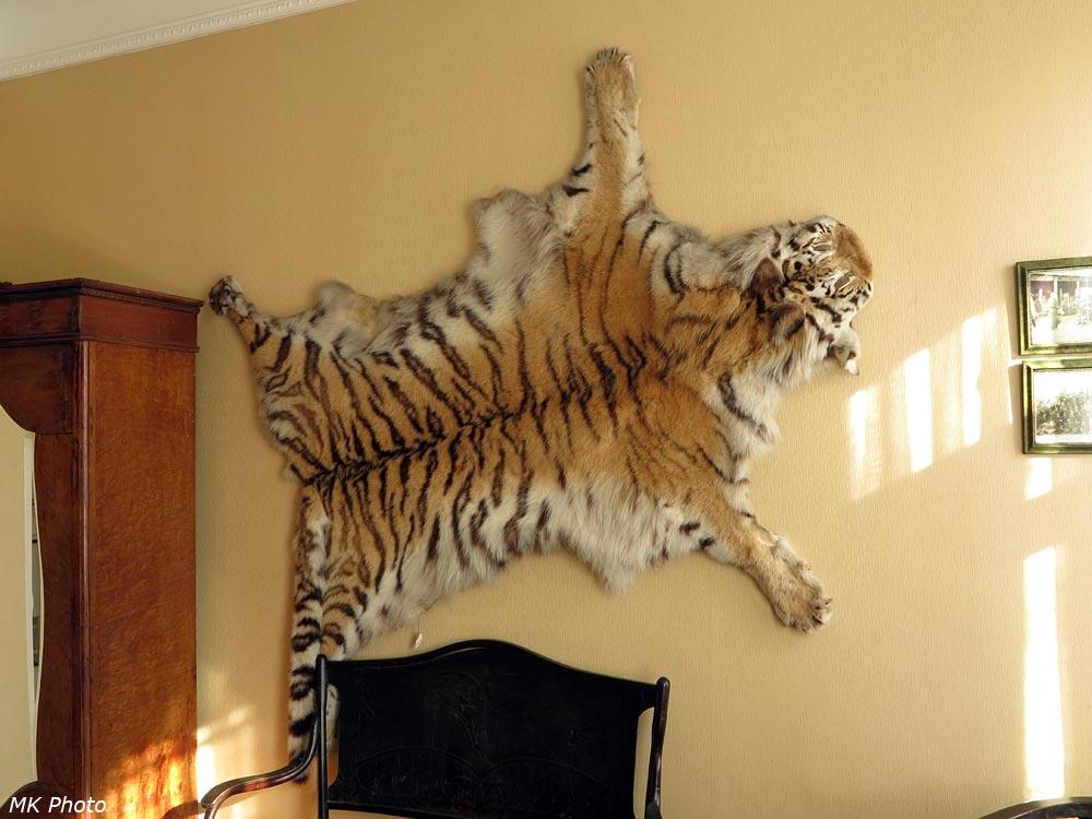 Шкура уссурийского тигра