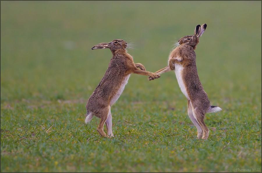 прикольные фото про зайца как полагается каждой