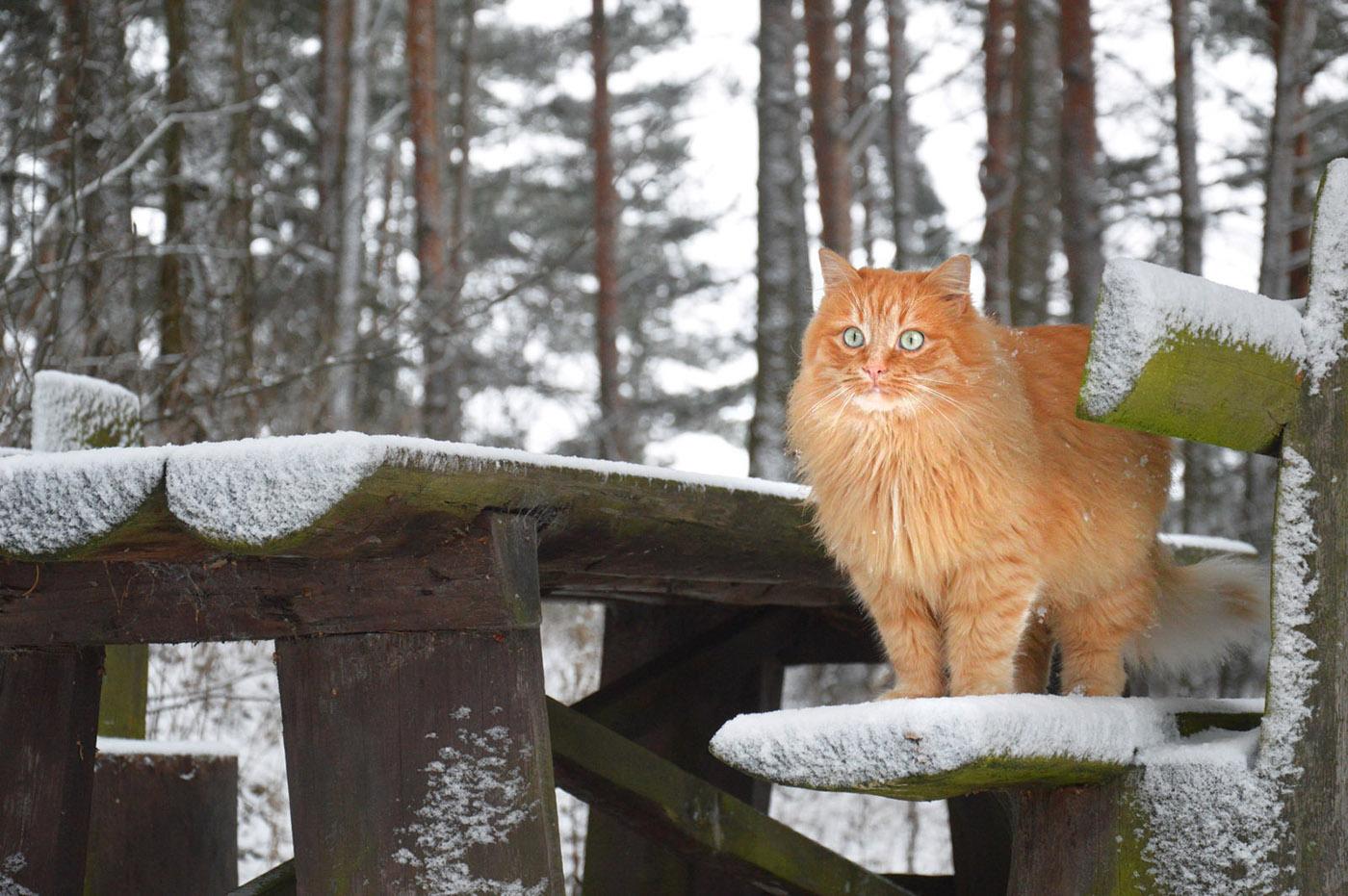 Рыжий кот Red-headed cat / Nadya Alex-Na
