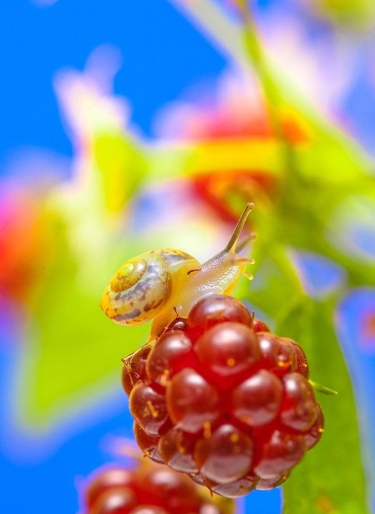 2. Улитками называют брюхоногих моллюсков, обладающих наружной раковиной. Брюхоногих моллюсков с руд