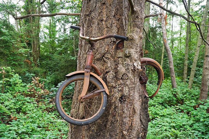 Что на самом деле произошло с велосипедом, вросшим в дерево? (5 фото)