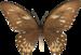 бабочки 5 (49).png