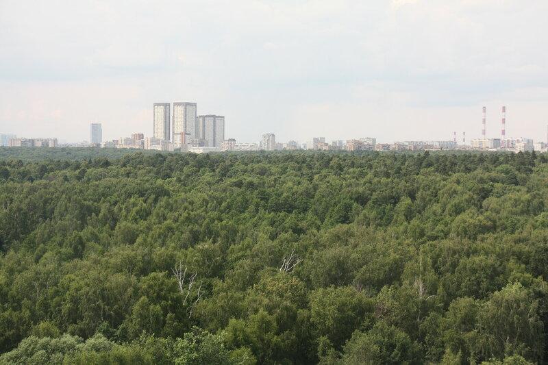 47. Измайловский лесопарк, Москва.JPG