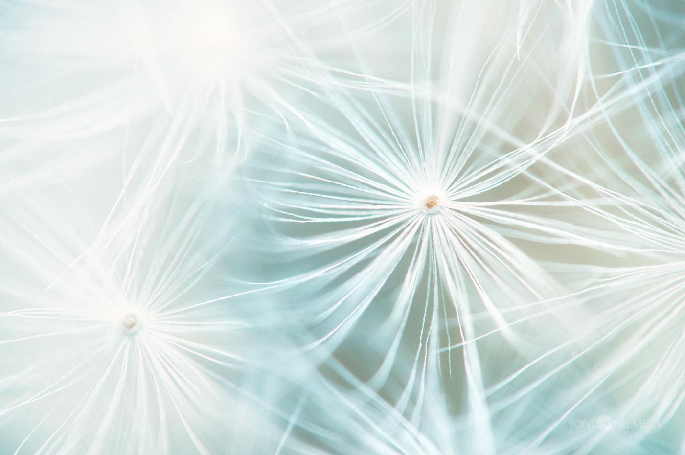 Семена / фото Joni Niemelä