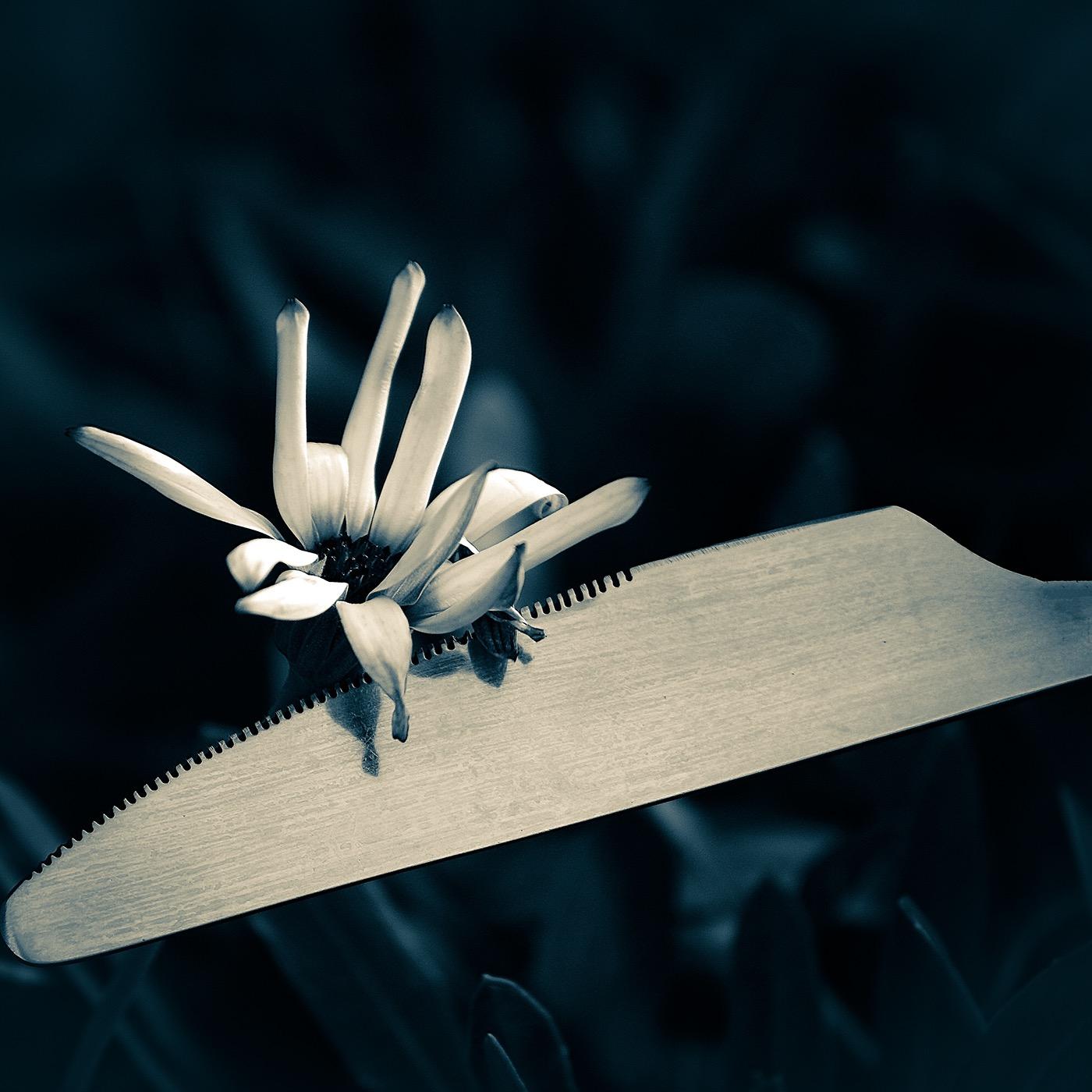 Столовые приборы Cutlery / фото Karyn Easton