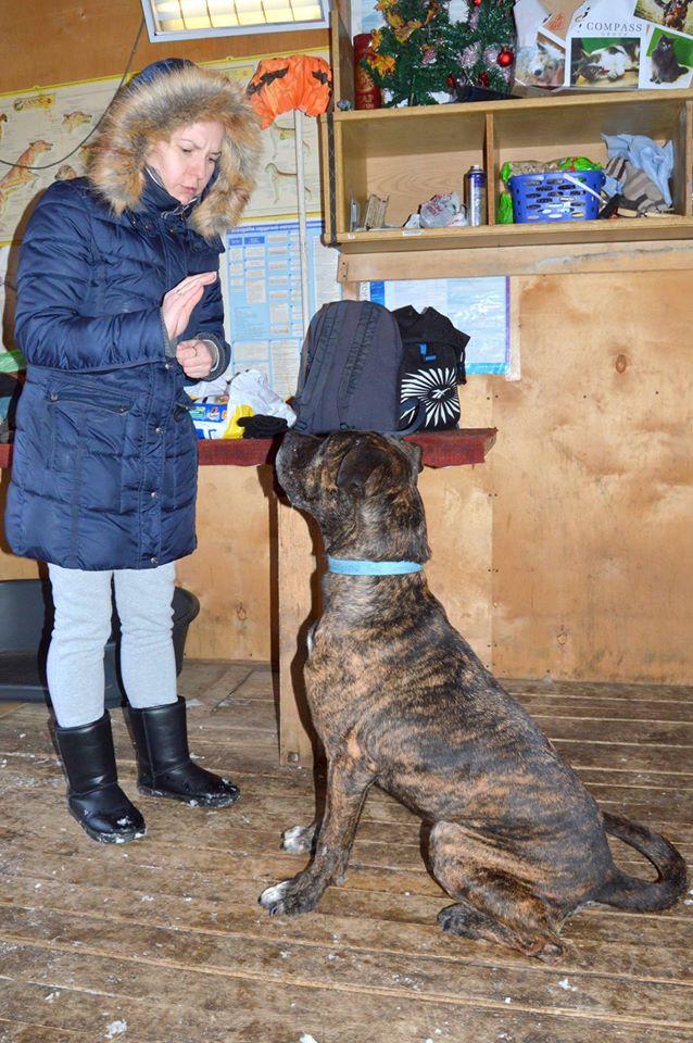 Тайсон собака из приюта догпорт