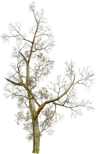 Клипарт растения