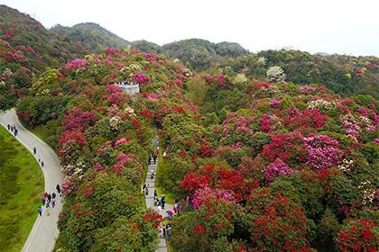 Ученые подсчитали количество видов деревьев наЗемле