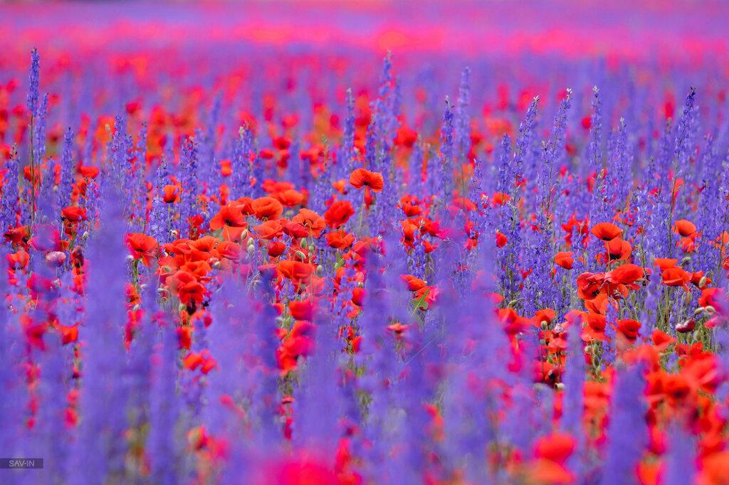 Цветущие поля Крыма