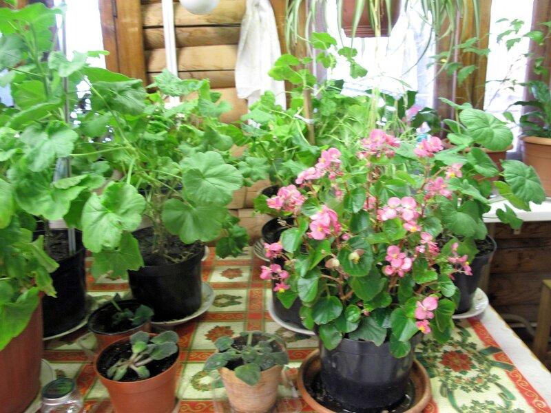 Весенний зимний садик подворья