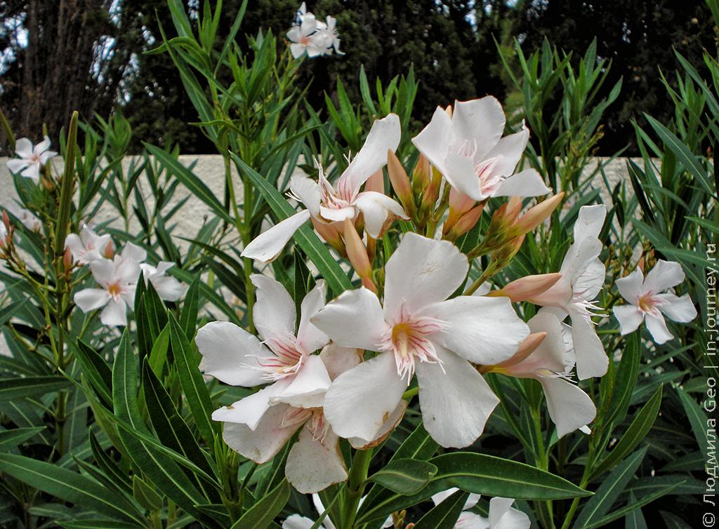 флора в Хаммамете