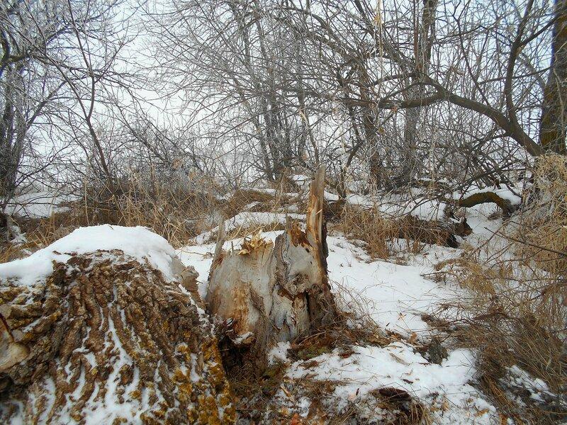 Дикость места ... В походе декабрьском, снежно-туманном,