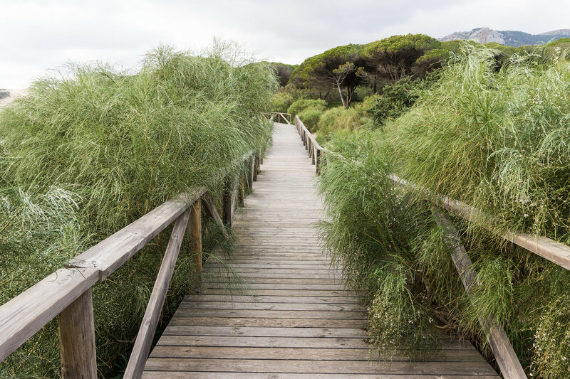 деревянная пешеходная дорожка на дюну Bolonia на берегу Света (costa del luz)