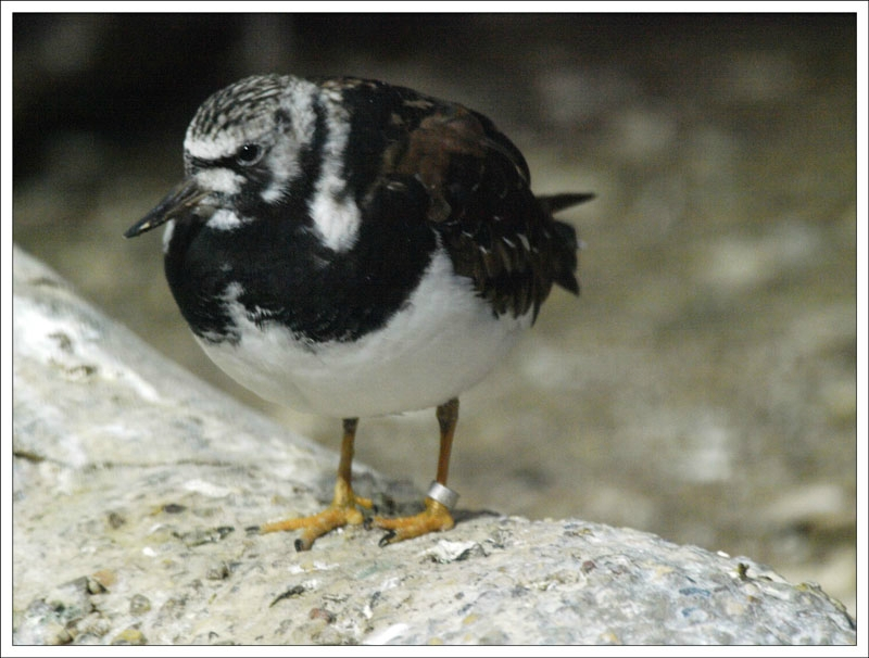 85_Bird.jpg