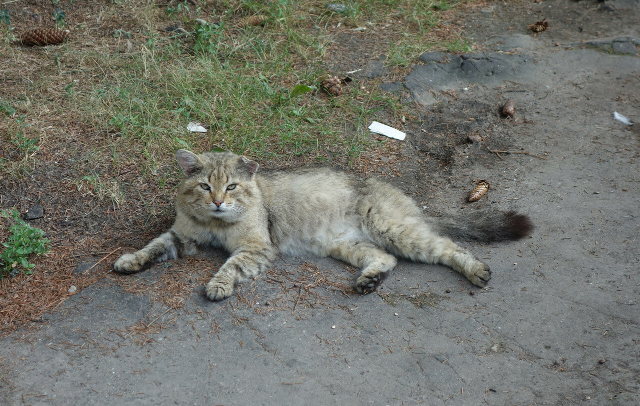 кот не лыком шит