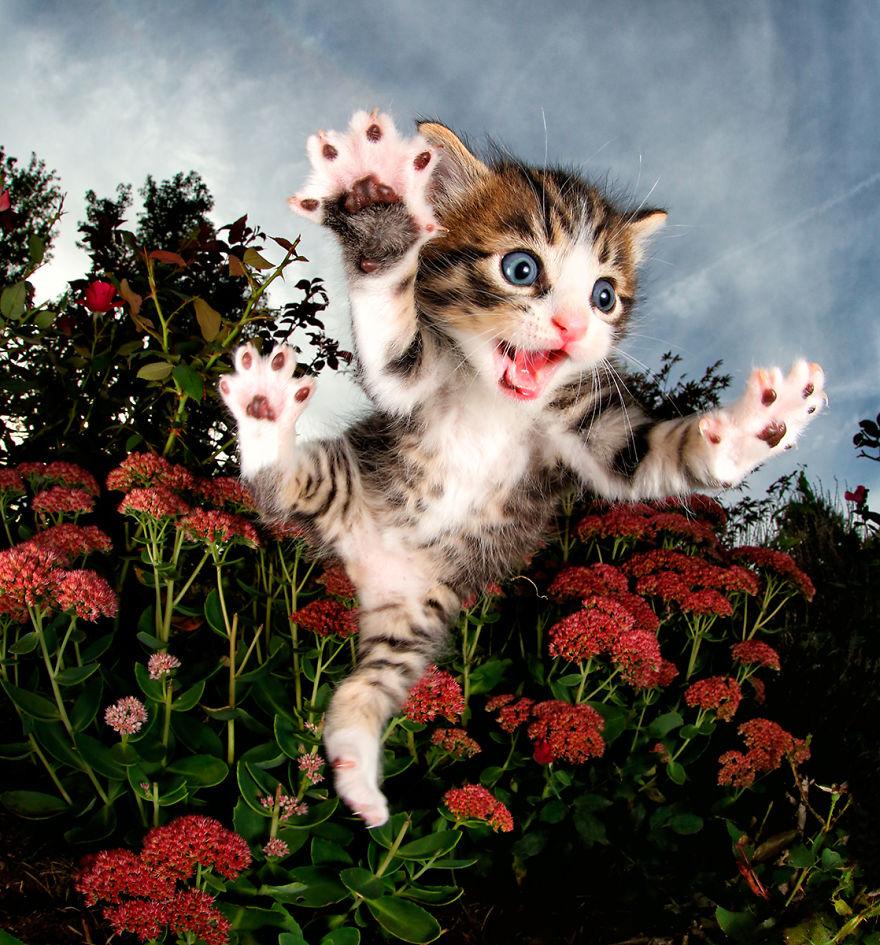 Вот что пишет сам автор о своей работе: «Моя новая серия — о спасенных котятах, которые делают то, ч