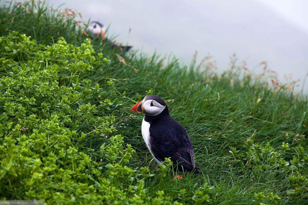 15. Тысячи, десятки тысяч птиц вокруг меня. Путешественники позади меня заметно отстали, и я им