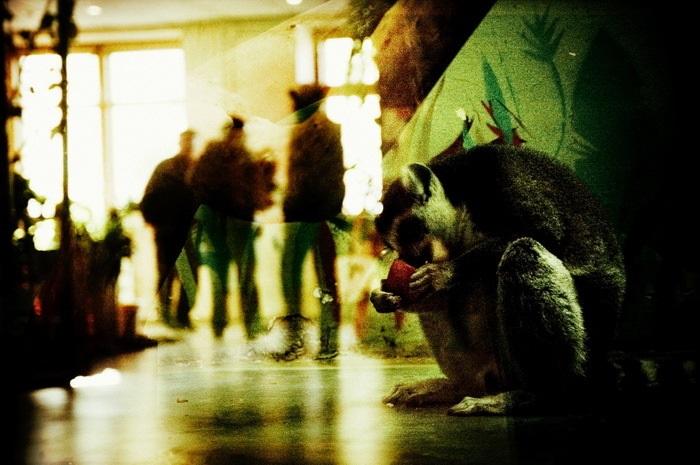 Я – это ты, а ты – это я: единые отражения людей и диких животных