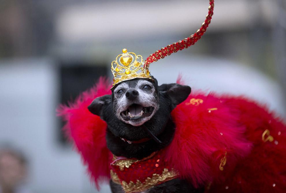 3. Первые карнавалы появились в Италии, и самый первый из них — карнавал в Венеции, которую ни