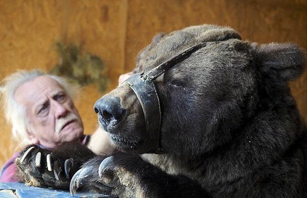 Кадры не для слабонервных! Жуткие скитания цирковых медведей, которые уже не могут участвовать в шоу. (9 фото)