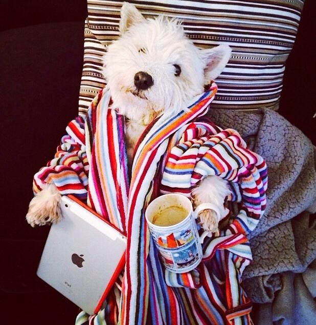 Доброе утро картинки смешные с животными, открытки