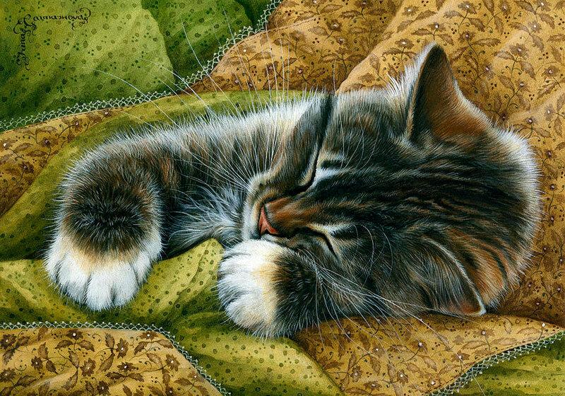 Картинки футболках, открытки спящий кот