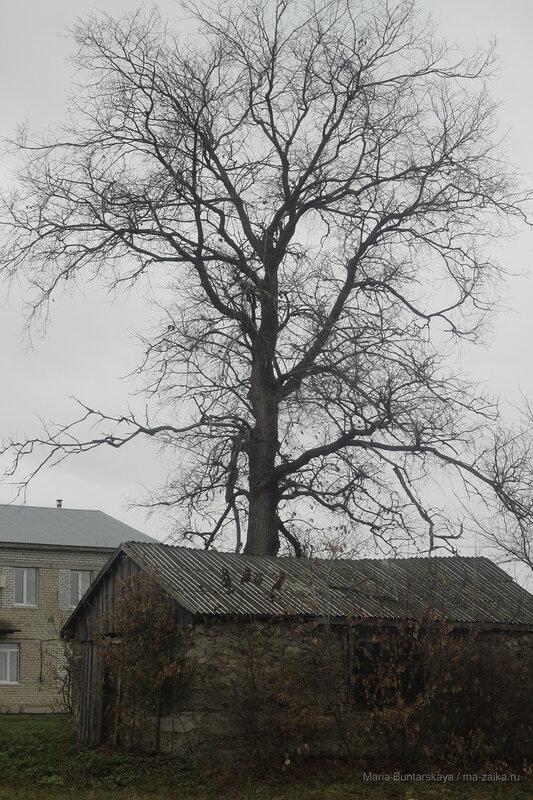 Сказочное дерево, село Сластуха, 29 октября 2016 года