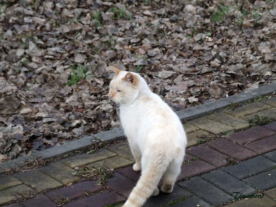 коты-7.jpg