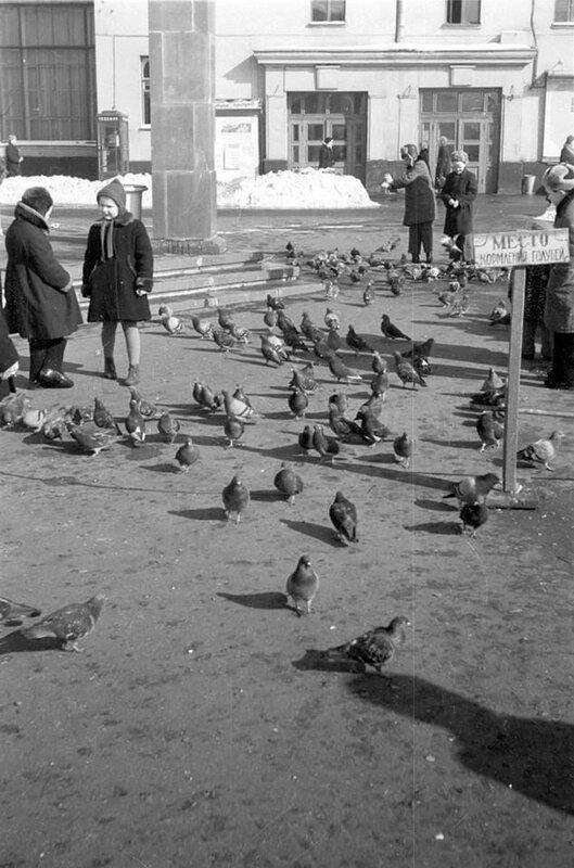 Места кормления голубей