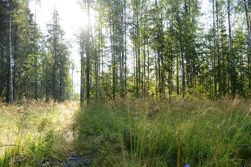 леса 18.jpg