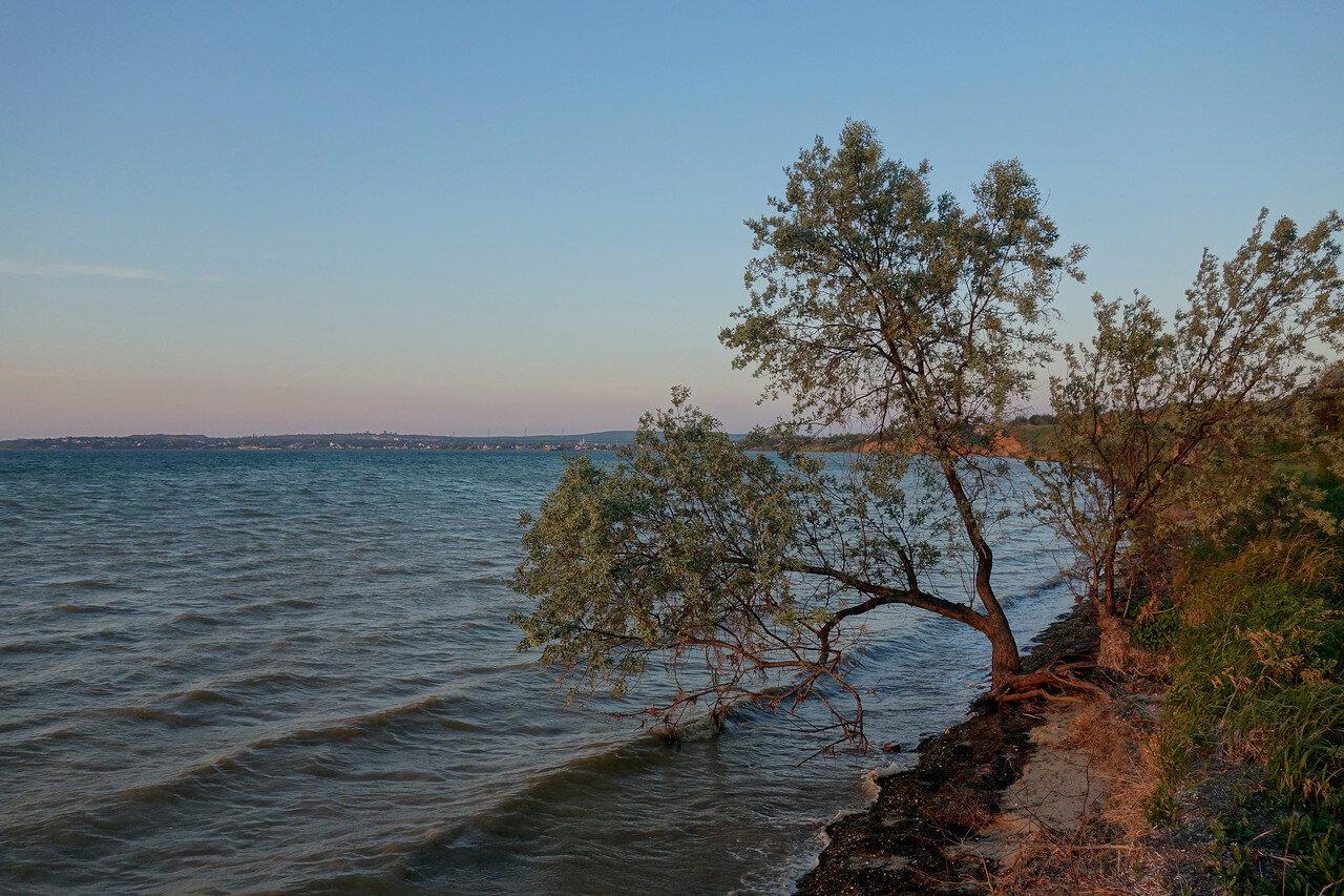 лох на берегу Таманского залива у п. Сенной