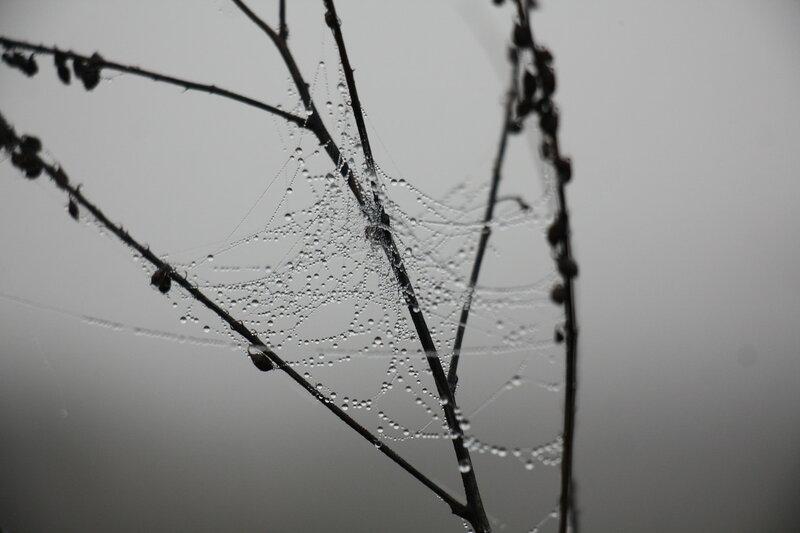 89. Предрассветное над рекой Шат. Присады, Тульская область..JPG