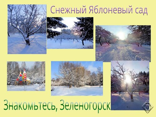 Снежный Яблоневый сад