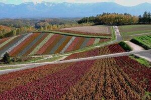 Цветочные фермы Хоккайдо