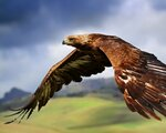 eagle_birds_predators_flight_wings_flap_53340_1280x1024.jpg