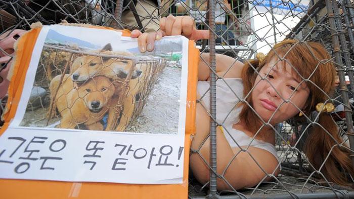 В Южной Корее закроют крупнейший рынок собачьего мяса (4 фото)
