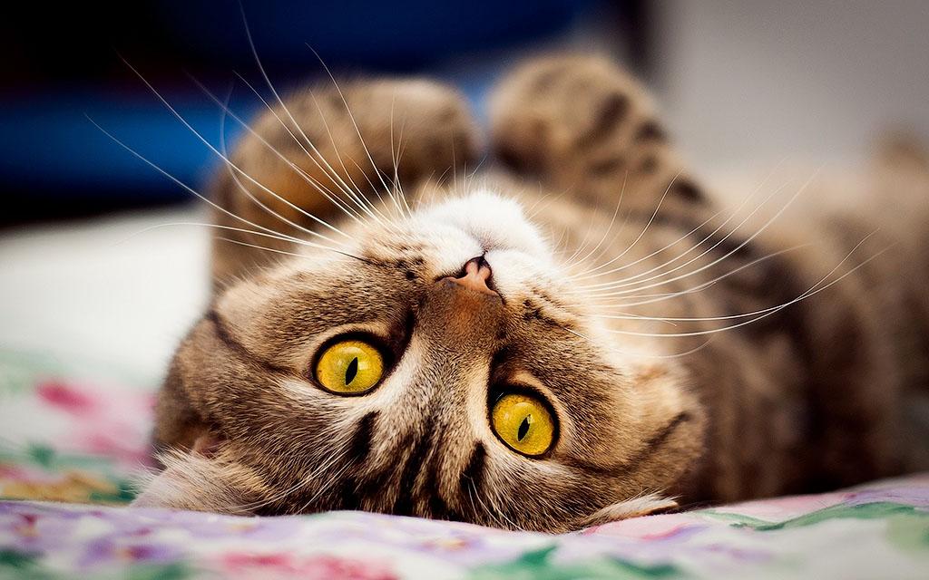 27. Кошка умеет слушать.
