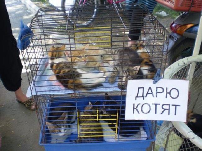 Собранные якобы на корм животным деньги идут прямо в карман «коробочников». Что касается четвероноги