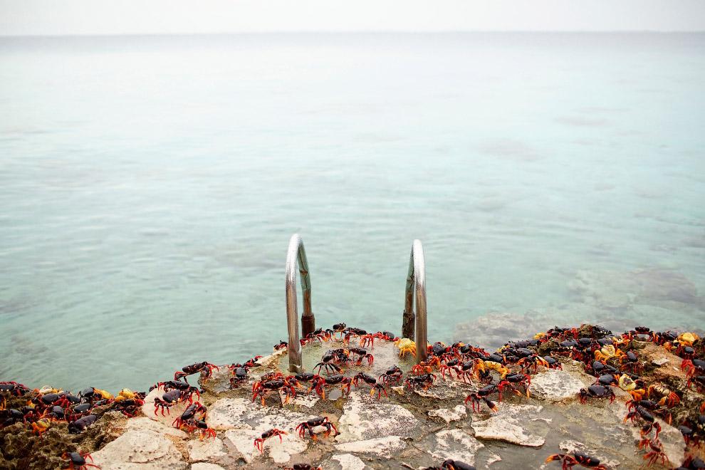 10. Крабов тут уважают. (Фото Alexandre Meneghini | Reuters):