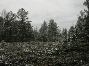 1 ноября - Выборгский р-он
