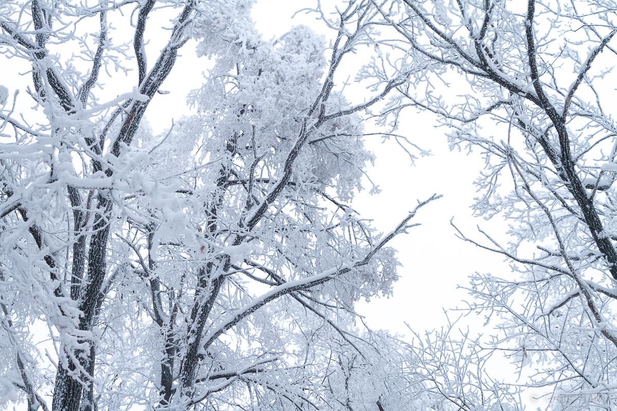 зима иней кумысная поляна саратов фото 4
