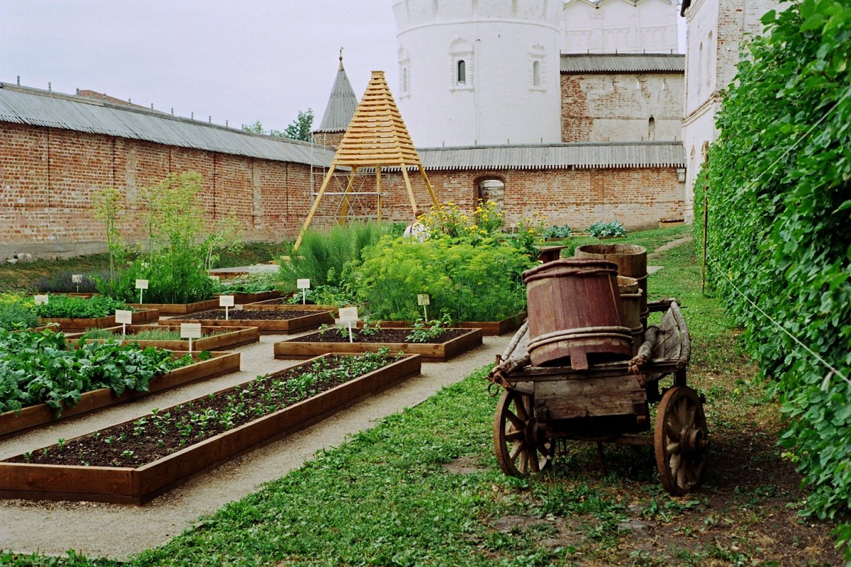 Аптекарский огород в ботаническом саду